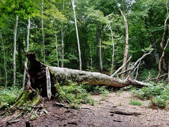 恵みの森 癒しの森